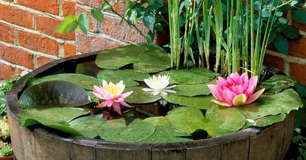 Créez un mini jardin d\'eau | Schilliger
