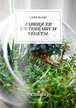 Fabriquer un terrarium végétal