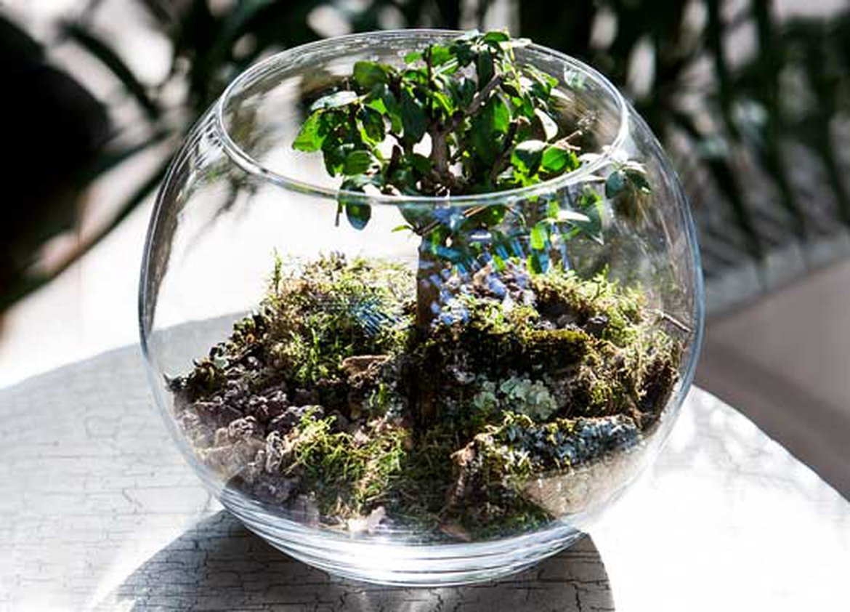 Comment Faire Un Terrarium Plante Grasse découvrez le terrarium végétal | schilliger