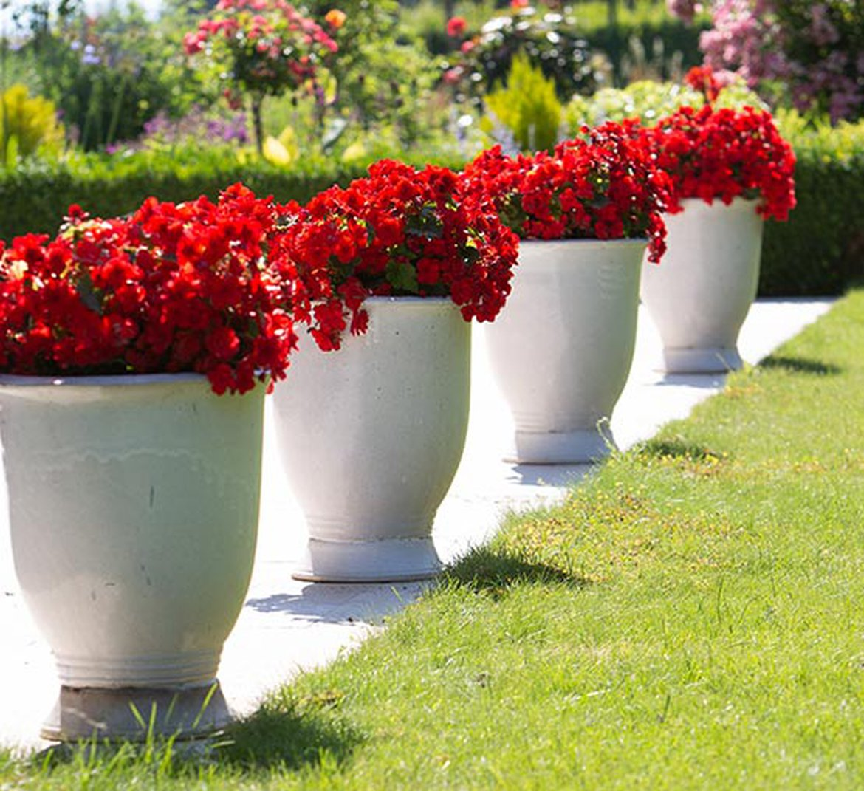 Quelle Plante En Pot Pour Terrasse poterie : bien choisir le contenant pour ses plantes