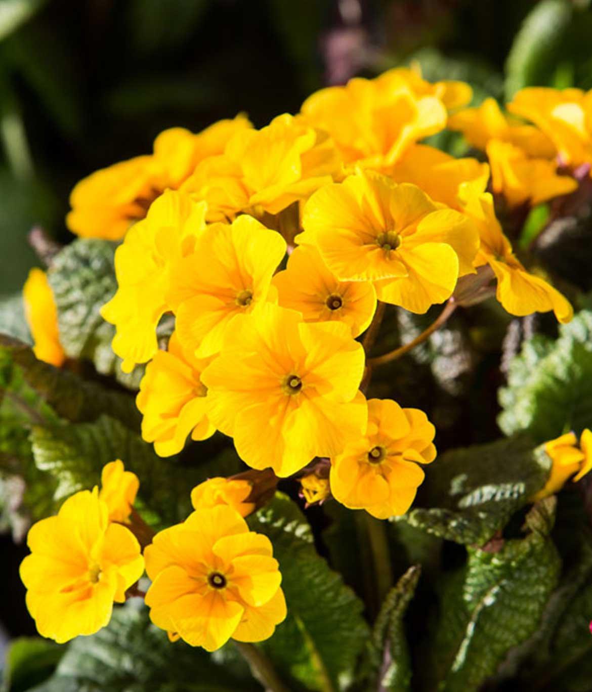 Plante Méditerranéenne Sans Arrosage illuminez votre extérieur avec des plantes de saison à