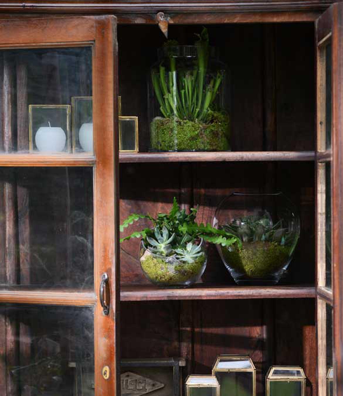Plantes Pour Tableau Végétal Intérieur intégrer du végétal dans votre décoration d'intérieur