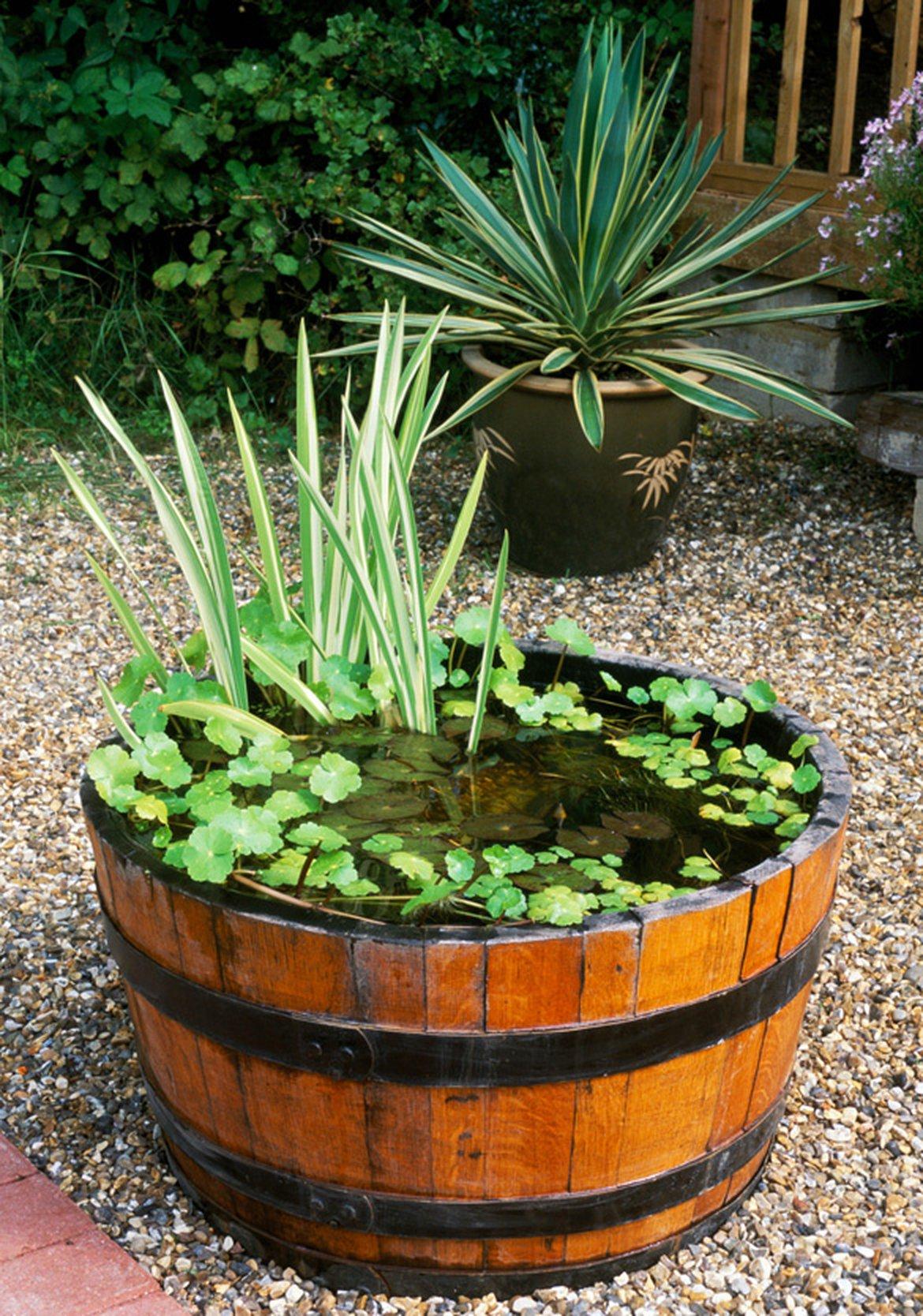 Comment Faire Un Petit Bassin Aquatique créez un mini jardin d'eau | schilliger