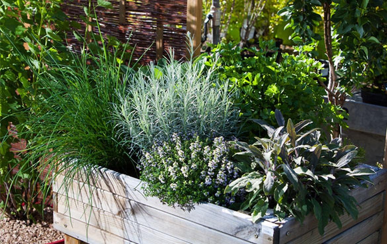 Bac Pour Arbuste De Jardin plantation de bac | schilliger