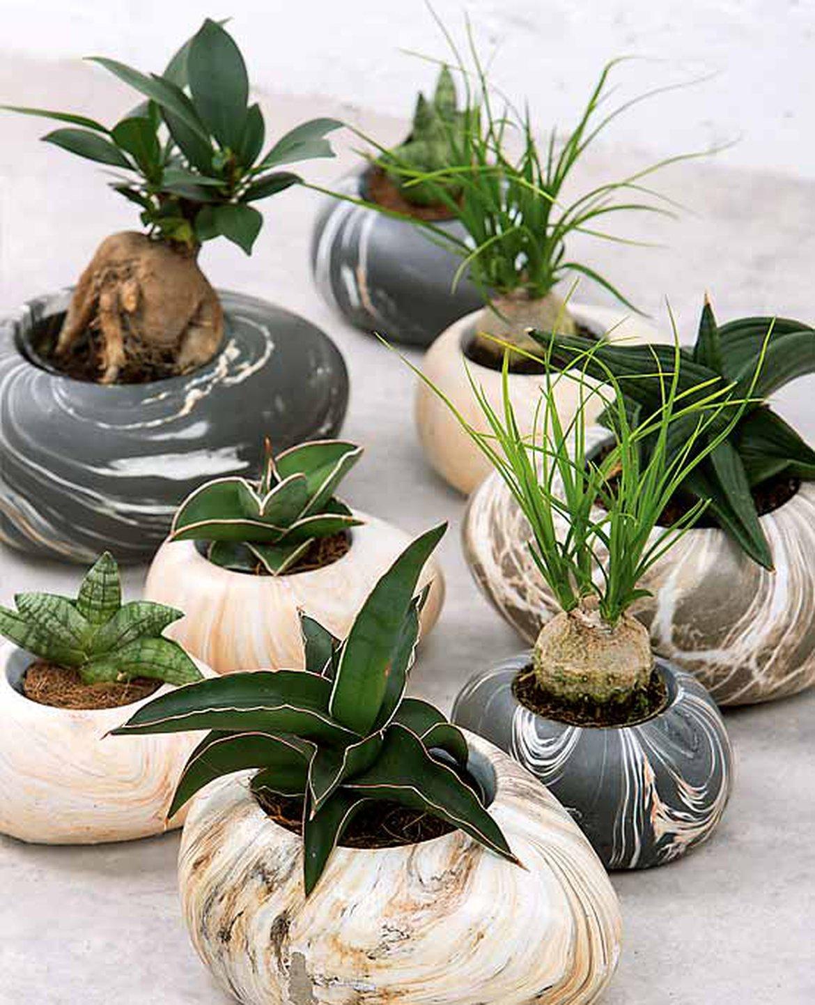 Plantes Pour Tableau Végétal Intérieur tout savoir sur les plantes d'intérieur pour une décoration