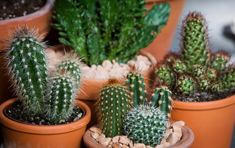 Plantes d 39 int rieur schilliger for Acheter plante interieur