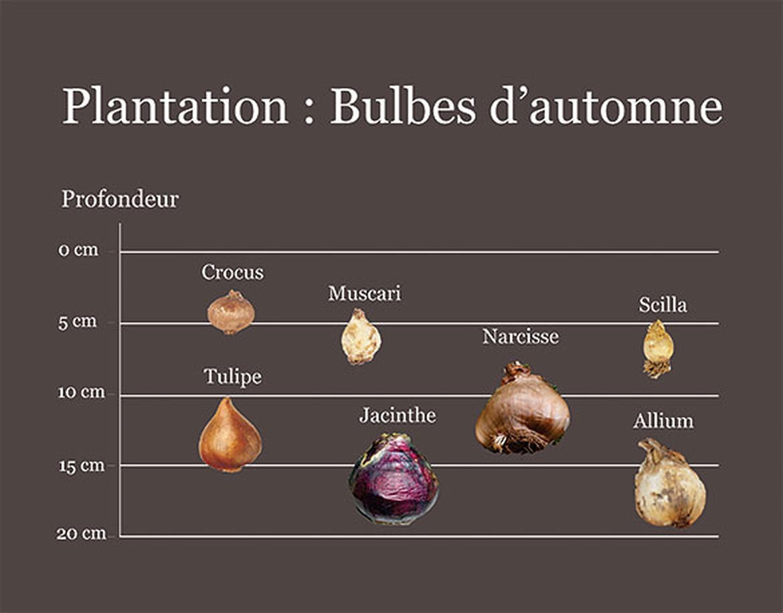 Planter des bulbes d'automne | Schilliger