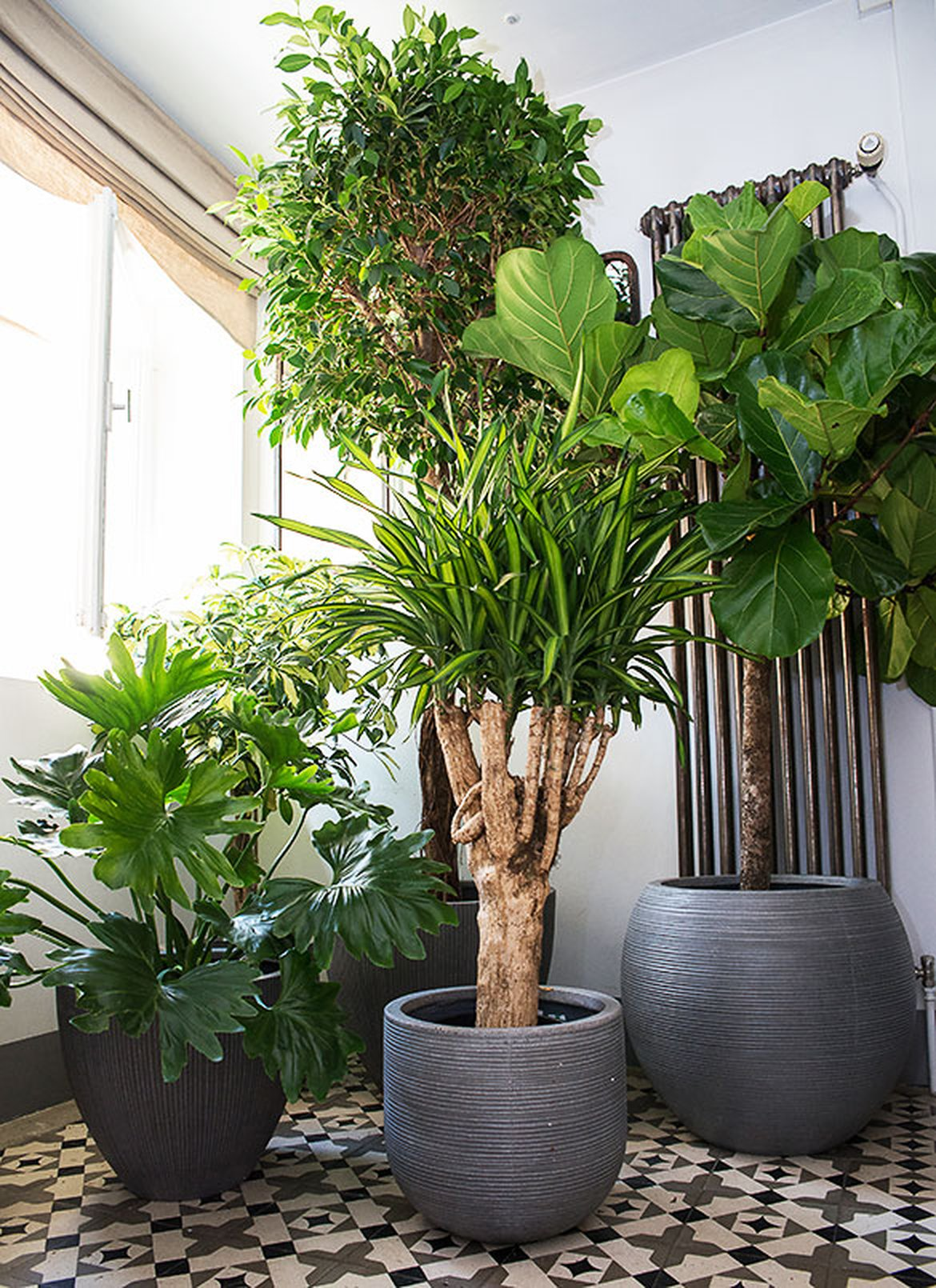 Plantes d interieur decoration fashion designs for Plante design d interieur
