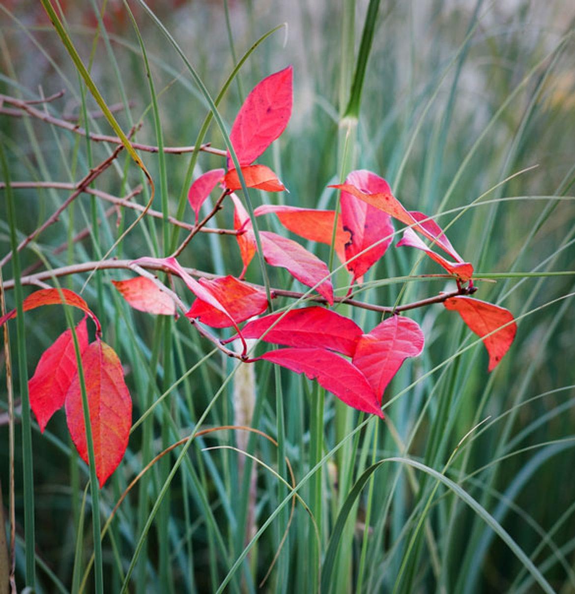 plante exterieur toute saison ordinaire plante exterieur toute saison plante vivace rampante. Black Bedroom Furniture Sets. Home Design Ideas