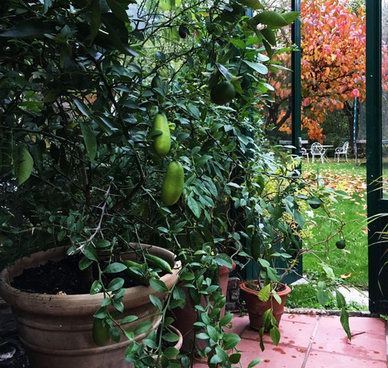 hivernage des plantes schilliger On hivernage des plantes