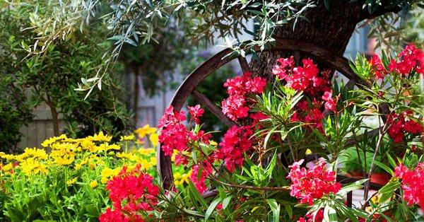 Créez un jardin méditerranéen   Schilliger