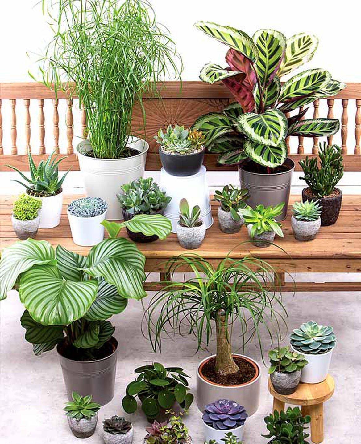 Plante Méditerranéenne Sans Arrosage tout savoir sur les plantes d'intérieur pour une décoration