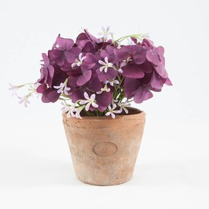 Oxalis violet et pot Antique Violet violine