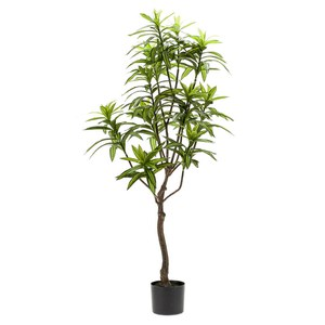 Schilliger Sélection  Dracaena artificiel  130cm