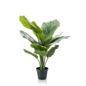 Schilliger Sélection  Calathea orbifolia artificiel  60cm