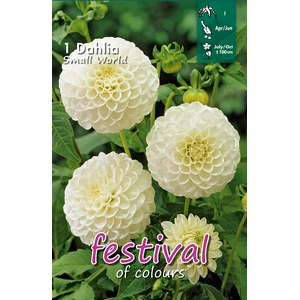 Dahlias Mini Pompon SMALL WORLD