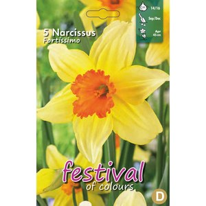 Narcissus 'Fortissimo'  5 pcs 14/16