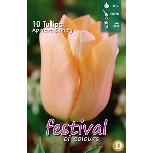 Tulipes 'Abricot Beauty'  10 pcs 12/+