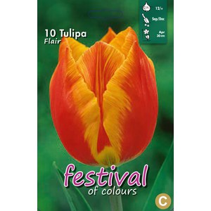 Tulipes 'Flair'  10 pcs 12/+