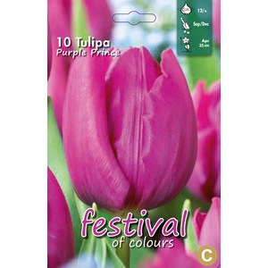 Tulipes 'Purple Prince'  10 pcs 12/+
