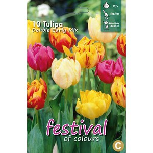 Tulipes doubles hâtive en mélange  10 pcs 12/+