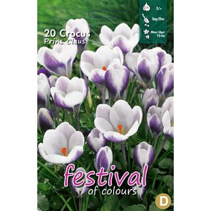 Crocus 'Prins Claus'  20 pcs 5/+
