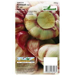 Ail à réplanter rose  Printemps 250 g  250Gr
