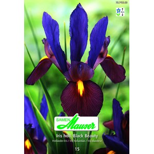 Iris.Hol.Black.Beauty 15  14/