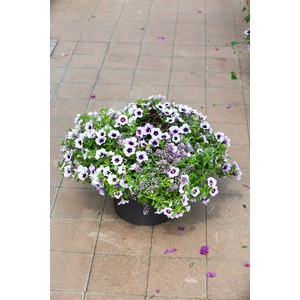 Schilliger Production  Garden Party  Pot de 28 cm