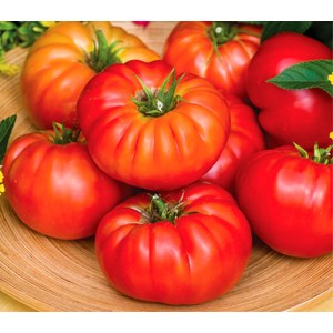 Schilliger Production  Tomate greffée 'Buffalo'  Pot de 12 cm
