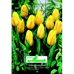 tulipe tt strong gold 10 12 schilliger. Black Bedroom Furniture Sets. Home Design Ideas