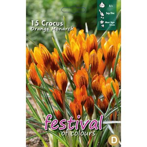 Crocus 'Orange Monarch'