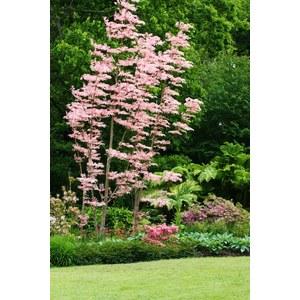 Jardin histoire de m tier p pini re arbustes caduc for Catalogue arbustes jardin