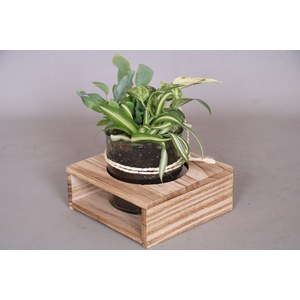 Arrangement  Pot 15cm h20