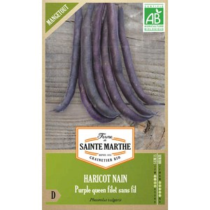 Haricot Nain Purple Queen Filet Sans Fil Mangetout  Environ env 350 Graines