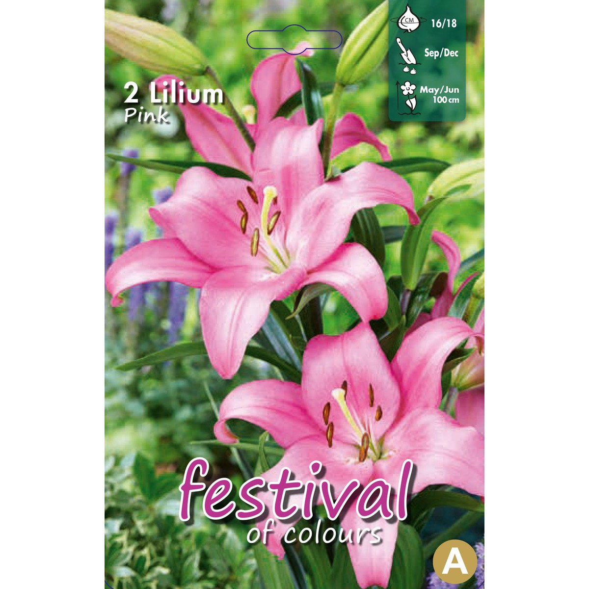 Lilium asiatique Rose  sans